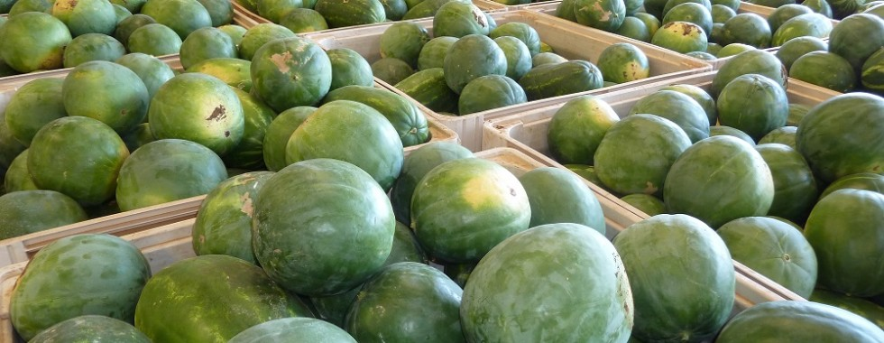 watermelons-resized