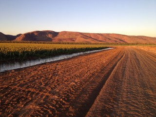 Watering our Sorghum